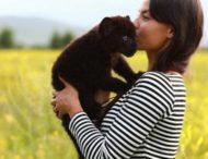 Пантера живет вместе с собакой и человеком