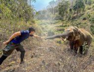 Спустя 12 лет слон узнал своего спасителя