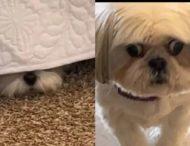 Пес удивил Сеть реакцией на «монстра» под кроватью