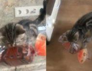 Котенок украл буханку хлеба на глазах у хозяина