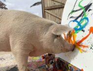 Свинья-художница нарисовала «портрет принца Гарри»