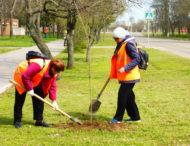 У Покрові триває весняне озеленення