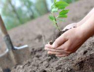 На Днепропетровщине планируют восстановить лесные массивы