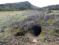 Кролики раскопали древние артефакты