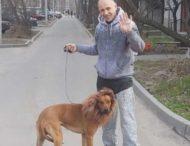 Мужчина прогуливался по улице с собакой-львом