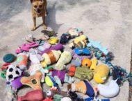 Пес-«клептоман» воровал игрушки у соседских собак