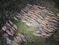 На Дніпропетровщині знову затримали браконьєрів (фото)