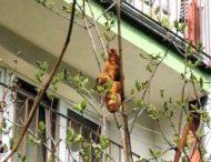 Женщина приняла круассан за«экзотическое животное» и вызвала спасателей