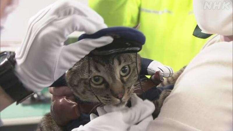 Главой отдела полиции назначили кота