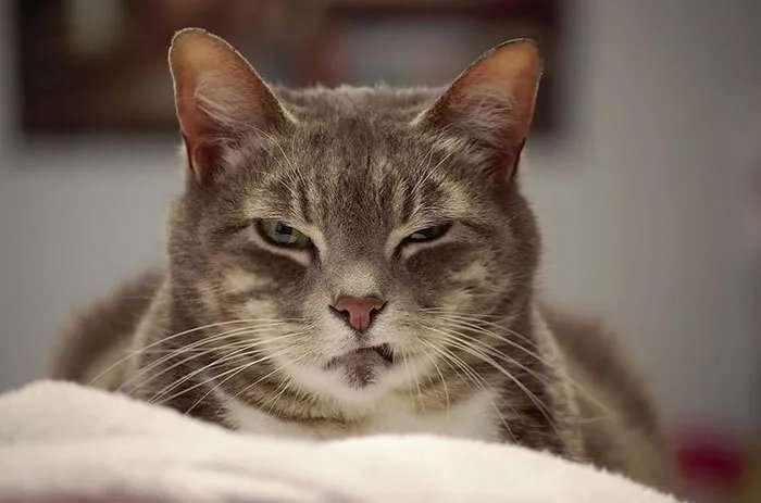 Некоторые коты запугивают одним взглядом