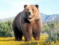 Путешествие велосипедиста обернулось преследованием медведя