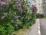 «Народный сад» этой весной