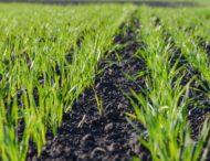 З липня 2021 року мешканці Дніпропетровщини зможуть купити або продати землю