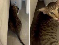 Кот пожаловался на работу автоматической кормушки