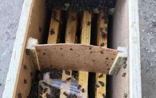 На Закарпатье ожили пчелы в посылках Укрпочты