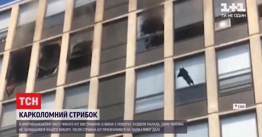 Кот выпрыгнул с пятого этажа и приземлился на лапы