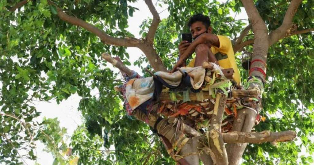 Студент с COVID-19 самоизолировался на дереве