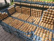 В Киеве появилось место, где можно «посидеть на яйцах»