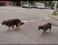 В Запорожье замечены чрезвычайно умные собаки