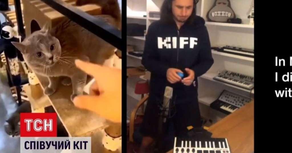 Кот-певец стал звездой Instagram