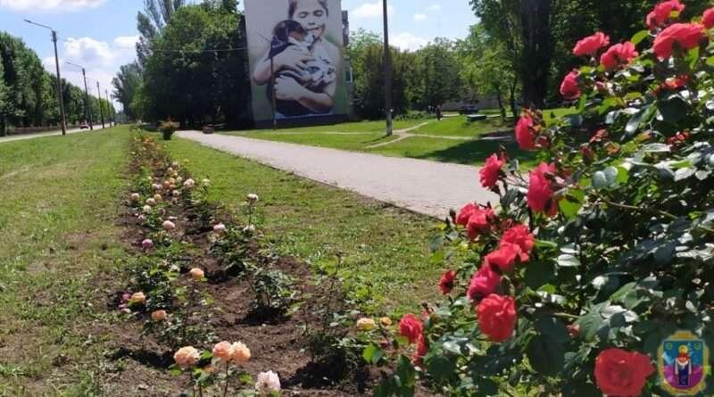 На Дніпропетровщині місто зустрічає гостей вишуканими квітами (фото)