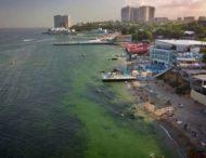 В Одессе позеленело море