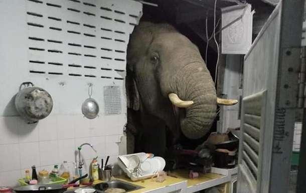 Голодный слон разрушил стену