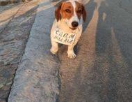 В Бердянске даже собаки сдают жилье