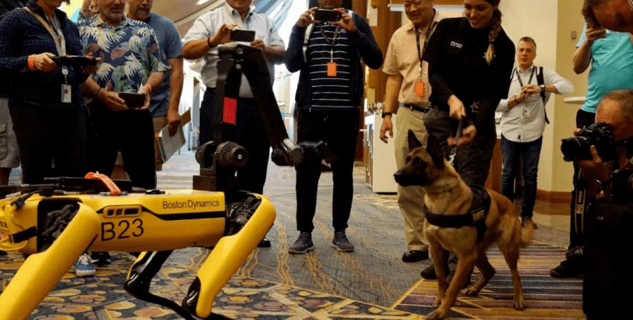 Робопсы Boston Dynamics вышли на прогулку — прохожие сняли реакцию настоящего пса