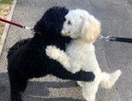 Внезапная встреча собак, разлученных в детстве, вызвала восторг в соцсетях