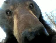 Охотник нашел в лесу камеру и удивился, обнаружив, что видео на нее снимал медведь