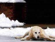 Сеть насмешила собака, спешащая к хозяйке по скользкой дорожке