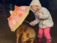 Спасающая собаку от дождя девочка влюбила в себя пользователей Сети