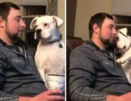 Сеть насмешила собака, устроившая мастер-класс по выпрашиванию вкусняшек