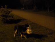 У Луцьку собака вкрав у компанії чоловіків пакет з горілкою і закускою